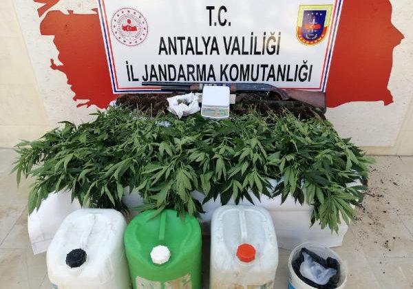 Finike Jandarması'ndan uyuşturucu operasyonu