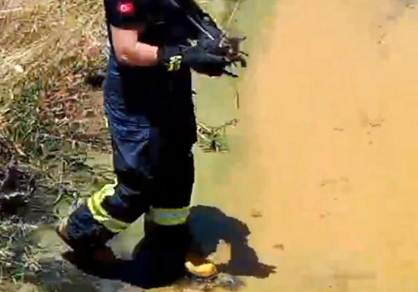Kanala düşen kediyi itfaiyeciler kurtardı