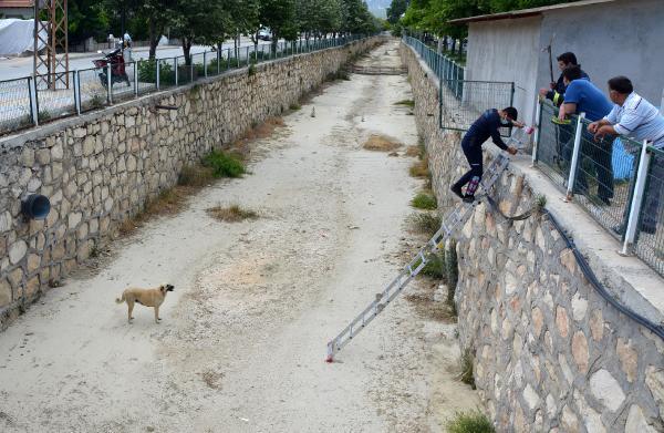 Kanala düşen köpeği itfaiye kurtardı