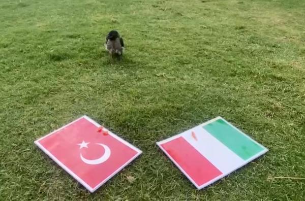 Karga Dido'nun tahmini Türkiye