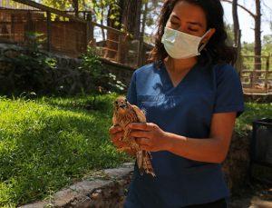 Mart ayından bu yana 120 hayvanın tedavisi yapıldı