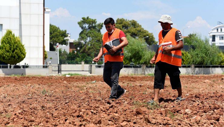 Muratpaşa'da susam tarımı başladı