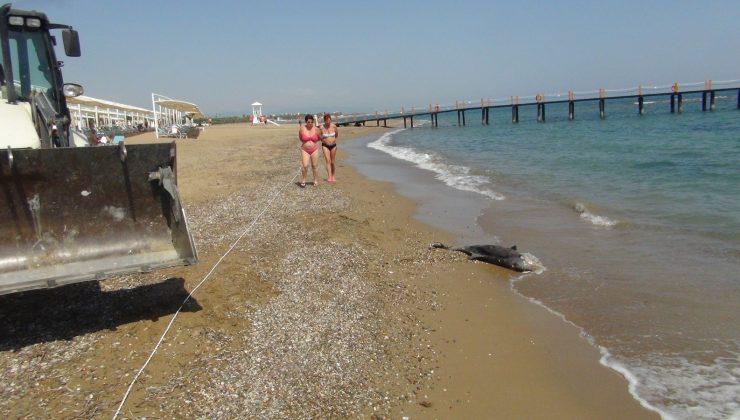 (Özel) Açıkta bulunan ölü yunus balığı sahile çıkartıldı