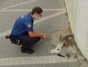 (ÖZEL) Kadın polis, bir aracın çarpıp kaçtığı yavru kedinin başından dakikalarca ayrılamadı