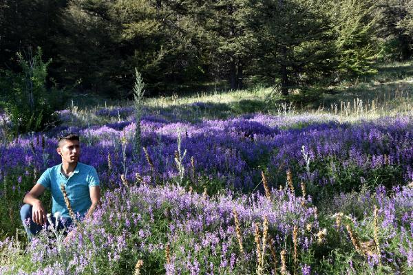 Toroslar çiçeklerle renklendi