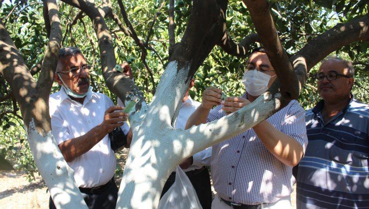 38 üreticiye 105 bin faydalı böcek dağıtıldı