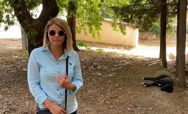 Akseki'de sokak hayvanlarının zehirlendiği iddiası