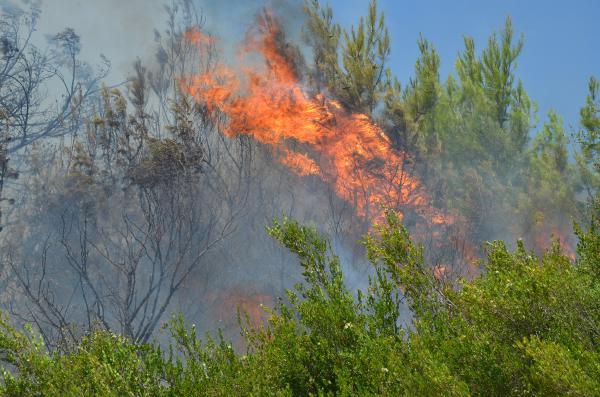Antalya'da 15 dekar makilik ile zeytin ve çam ağaçları yandı