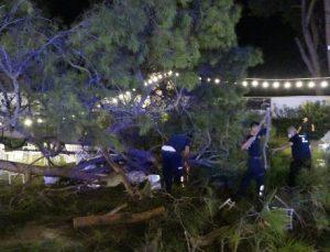 Antalya'da kır düğününde 'ağaç' devrildi: 2'si ağır 10 yaralı