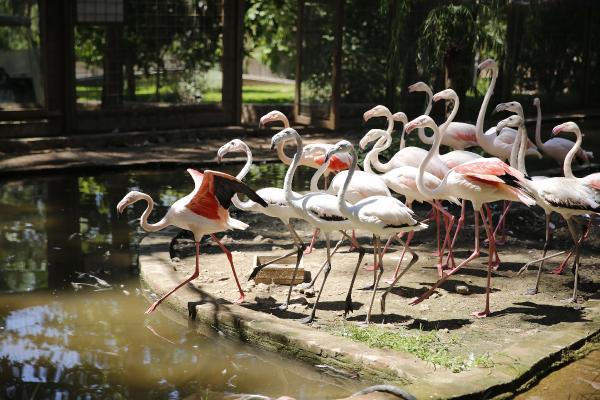 Hayvanat Bahçesi'nin misafirleri flamingolar