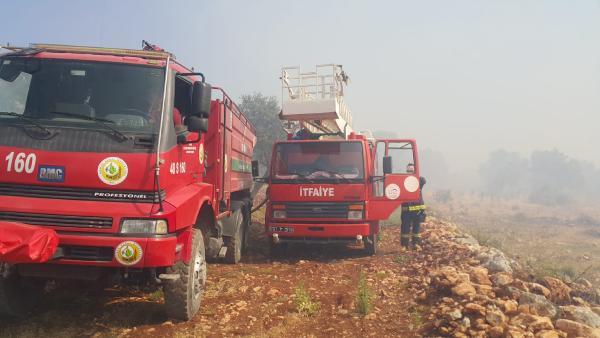 Kaş'ta 200 zeytin ağacı yandı
