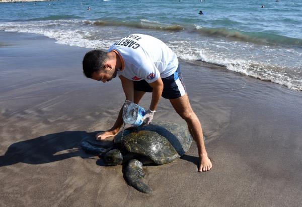 Kıyıya vuran yaralı ve bitkin yeşil deniz kaplumbağası tedaviye alındı