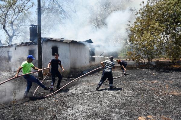 Kullanılmayan ev ve zeytin ağaçları, yangında zarar gördü
