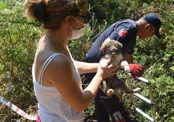 Kuyuya düşen 2 yavru köpeği, itfaiye kurtardı