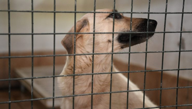 Manavgat Hayvan Barınağındaki kedi ve köpekler Konyaaltı'nda