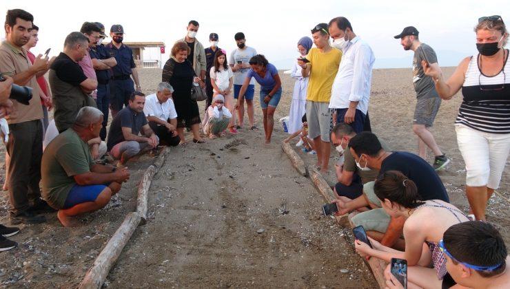Manavgat'ta sezonun ilk Caretta Caretta yavruları denizle buluştu