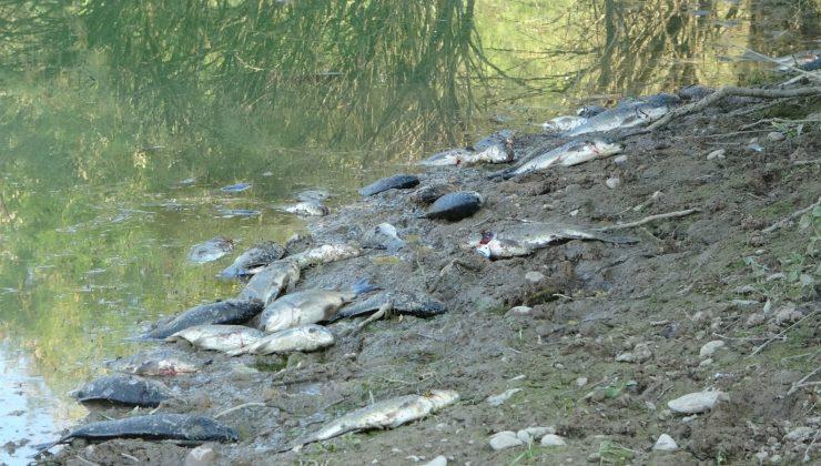 (ÖZEL) Manavgat'ta çamura dönen göletlerde balık ölümleri