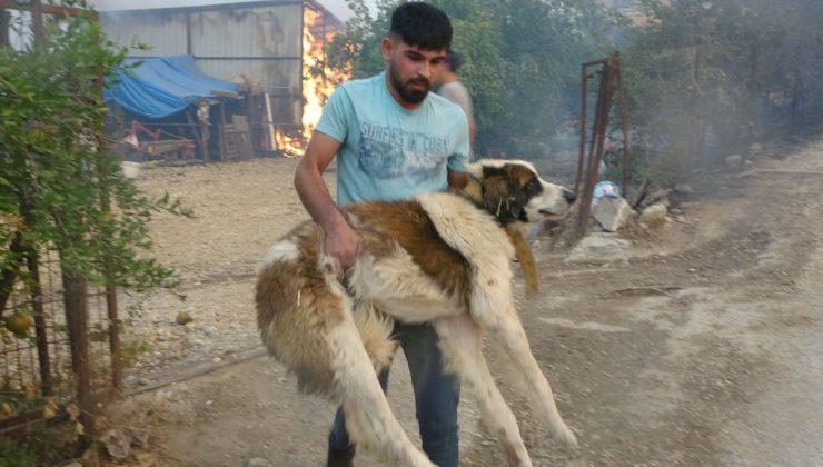 Vatandaşlar ve ekipler mahallelerde mahsur kalan hayvanları kurtarmak için seferber oldu