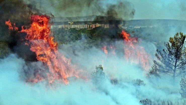 Zeytinpark'ın çamları alev alev yandı