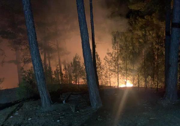 Alanya'da orman yangını büyümeden söndürüldü