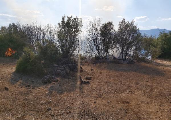 Alevler zeytin bahçesini yaktı