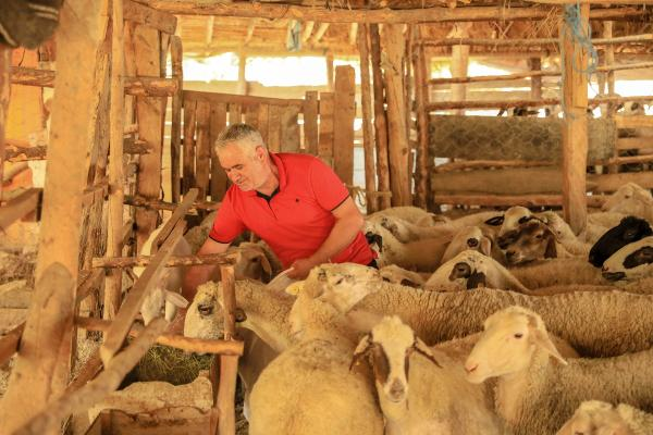Alevlerden 300 koyunla 30 kilometrelik kaçış