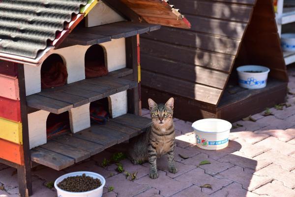Dokumapark'ta sokak kedilerine konforlu yaşam alanı