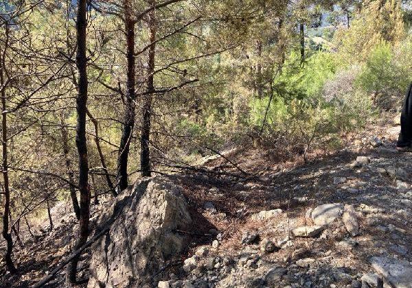 Gazipaşa'da kızılçam ormanında çıkan yangın söndürüldü