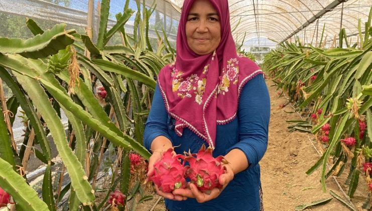 Girişimci ev hanımı iki yılda ürettiği ejder meyvesi ile yurt dışına açıldı