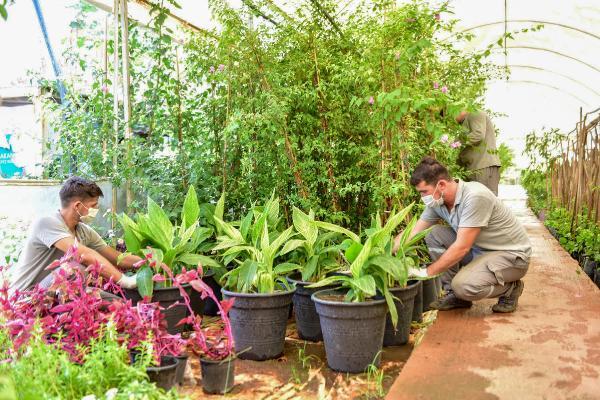 Kepez, ilçeyi kendi yetiştirdiği bitkilerle güzelleştiriyor