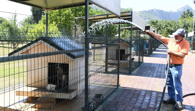 Konyaaltı'nda köpekler banyo seanslarıyla serinliyor