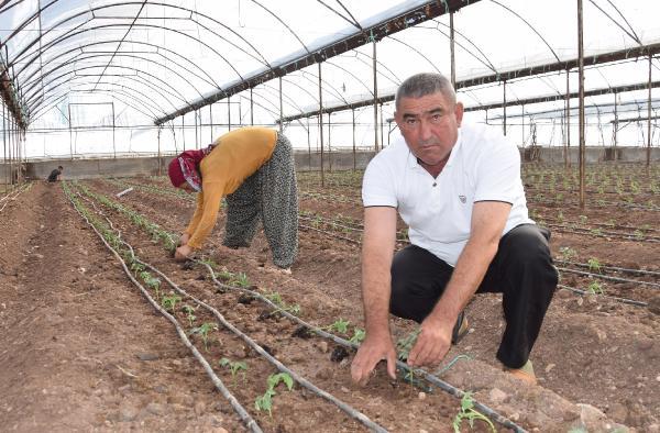 Kumluca'da 50 milyon domates fidesi dikiliyor