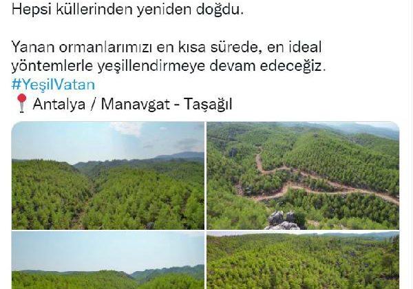 Manavgat'ta 13 yıl önce yanan orman yeşillendi