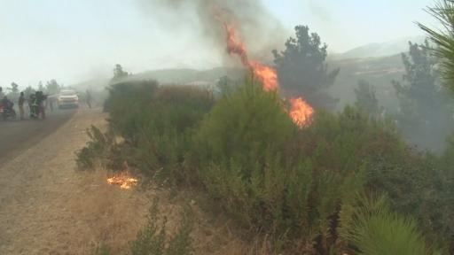 Manavgat'ta ekiplerin yangın mücadelesine vatandaşlar da destek oluyor