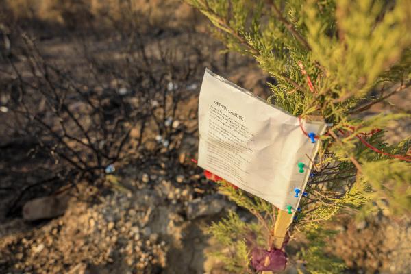 Manavgat'taki büyük yangın 10'uncu gününde (4)