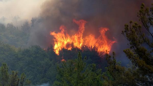 Manavgat'taki büyük yangın 5'inci gününde (2)