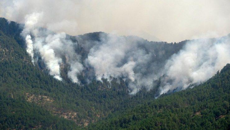Orman yangını bölgedeki yılkı atlarını da tehdit ediyor