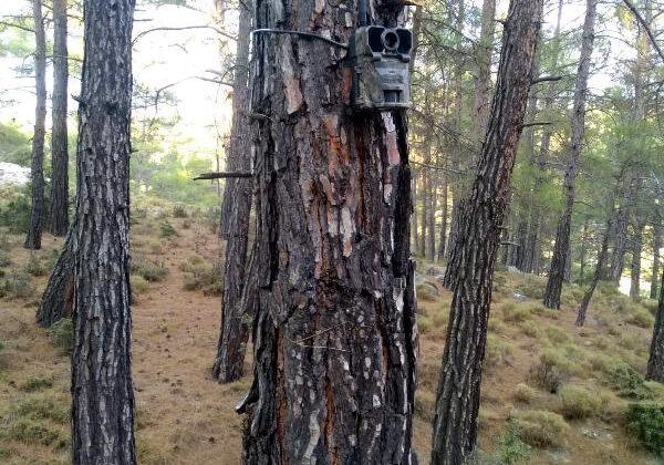 Ormanlar fotokapanla korunacak