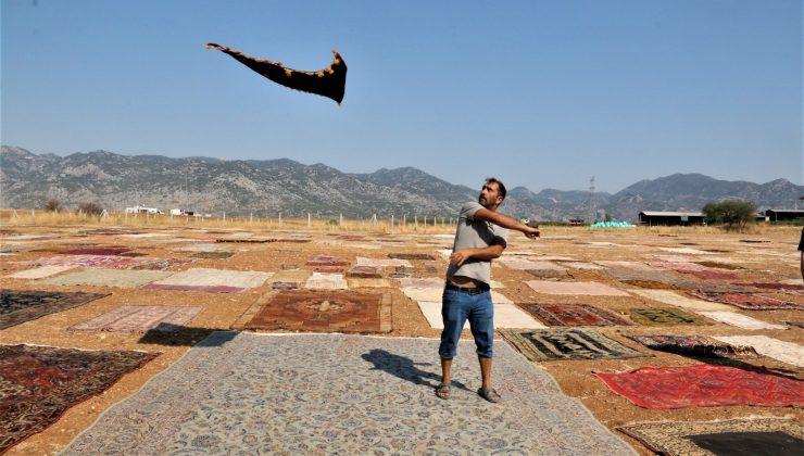 (ÖZEL) Antalya'da 'halı mevsimi' sona erdi hasat başladı