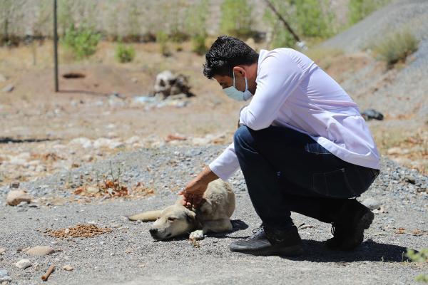 Sokak hayvanları için yaylalarda hummalı çalışma