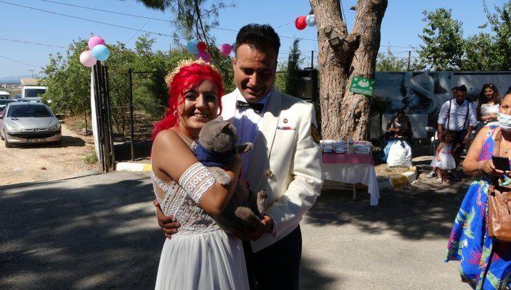 Veteriner teknikeri barınakta evlendi