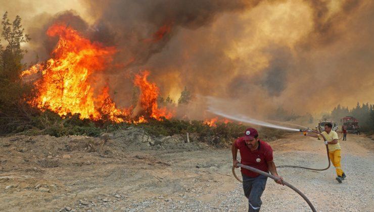 Yanan ormanlar için 1 milyon fidan bağışı