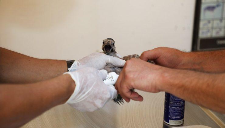 Yangından etkilenen 941 hayvan tedavi, 6 bin hayvan ise muayene edildi