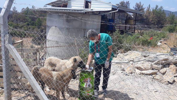 Yangından etkilenen sokak hayvanlarına Alanya Belediyesi'nden destek