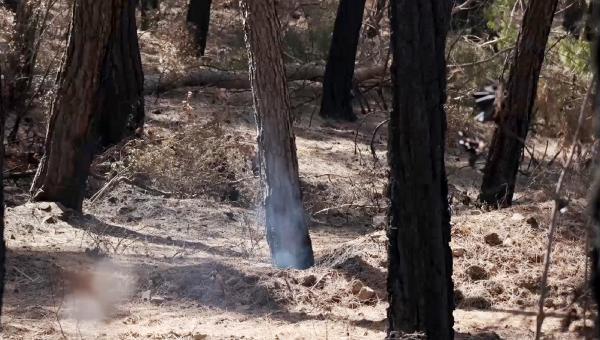 Yangının üzerinden 25 gün geçti, hala duman tütüyor