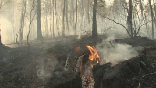 Yoğun duman ve alevlerin arasında canla başla mücadele ediyorlar