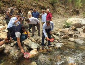 Antalya'da Alara Çayı'na 4 bin adet kırmızı benekli alabalık bırakıldı