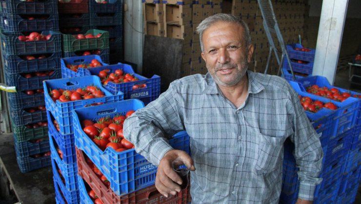 Antalya'da domates ve biber üreticisinde Rusya sevinci