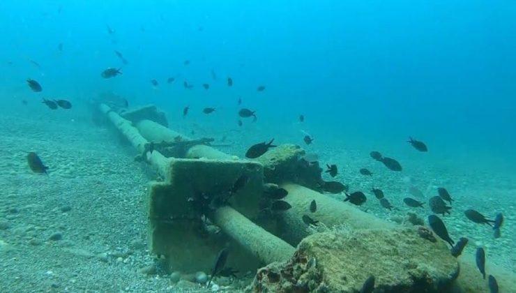 Kızıldeniz'den Akdeniz'e gelen istilacı balık türleri yönünü Ege denizine çevirdi