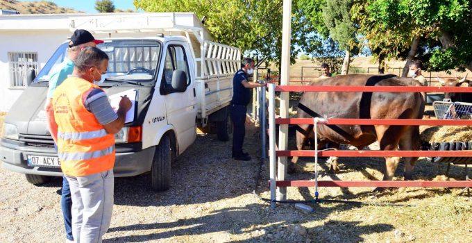 Manavgat'ta yangınzede çiftçilere hayvan desteği